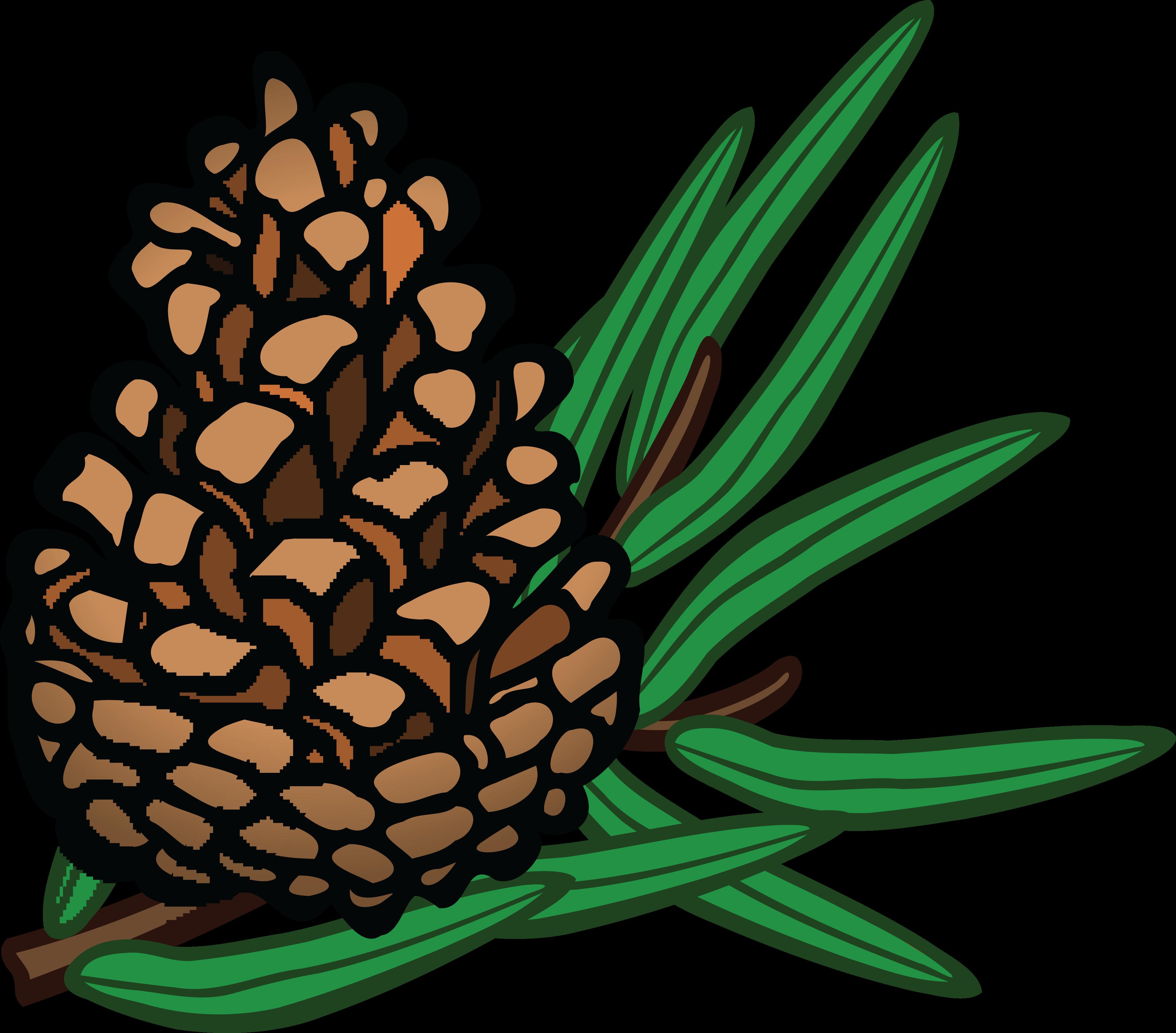 free clipart of a pinecone rh free clipartof com