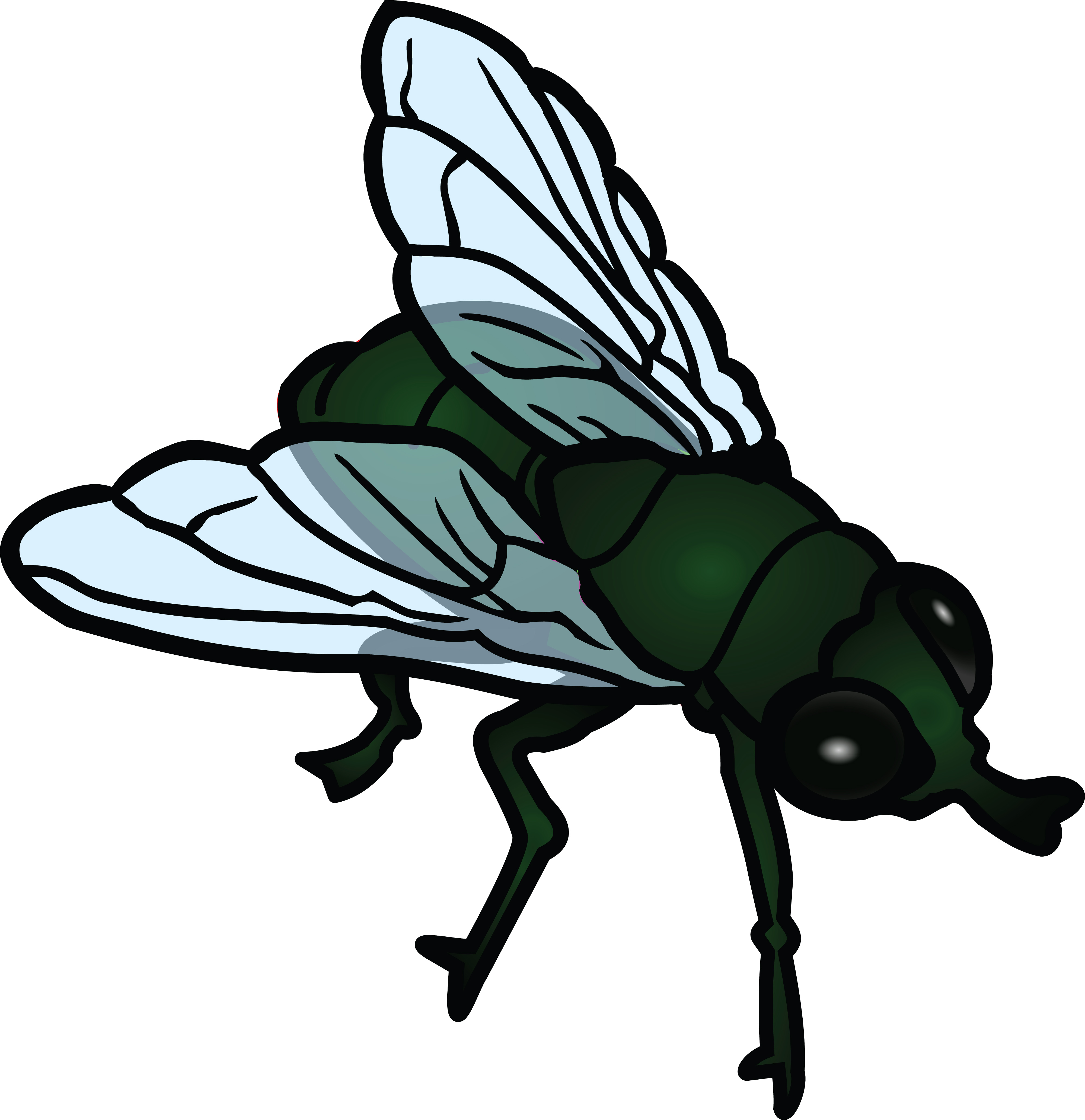 animated fly clipart - photo #14