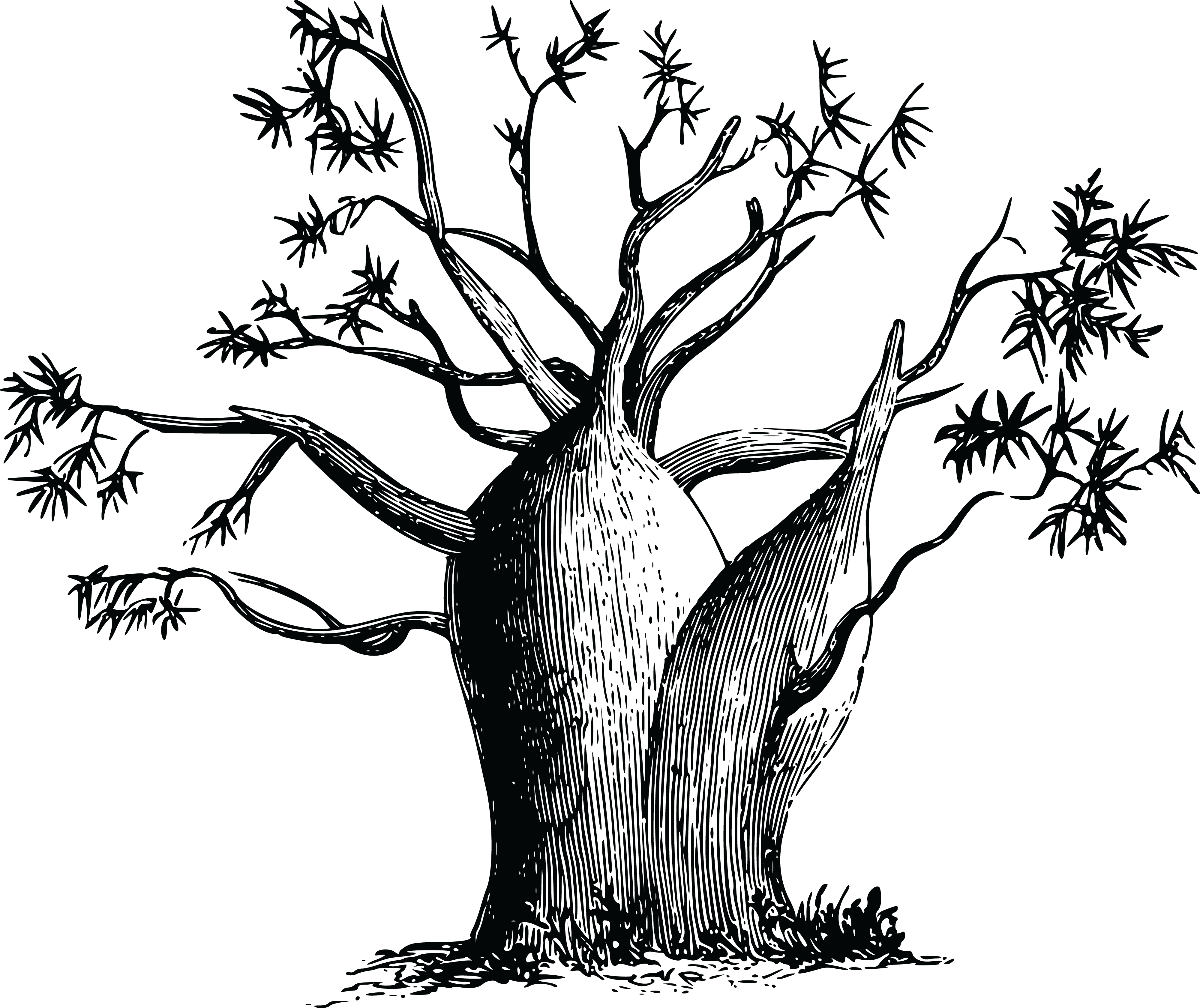 Free Clipart Of A Baobab