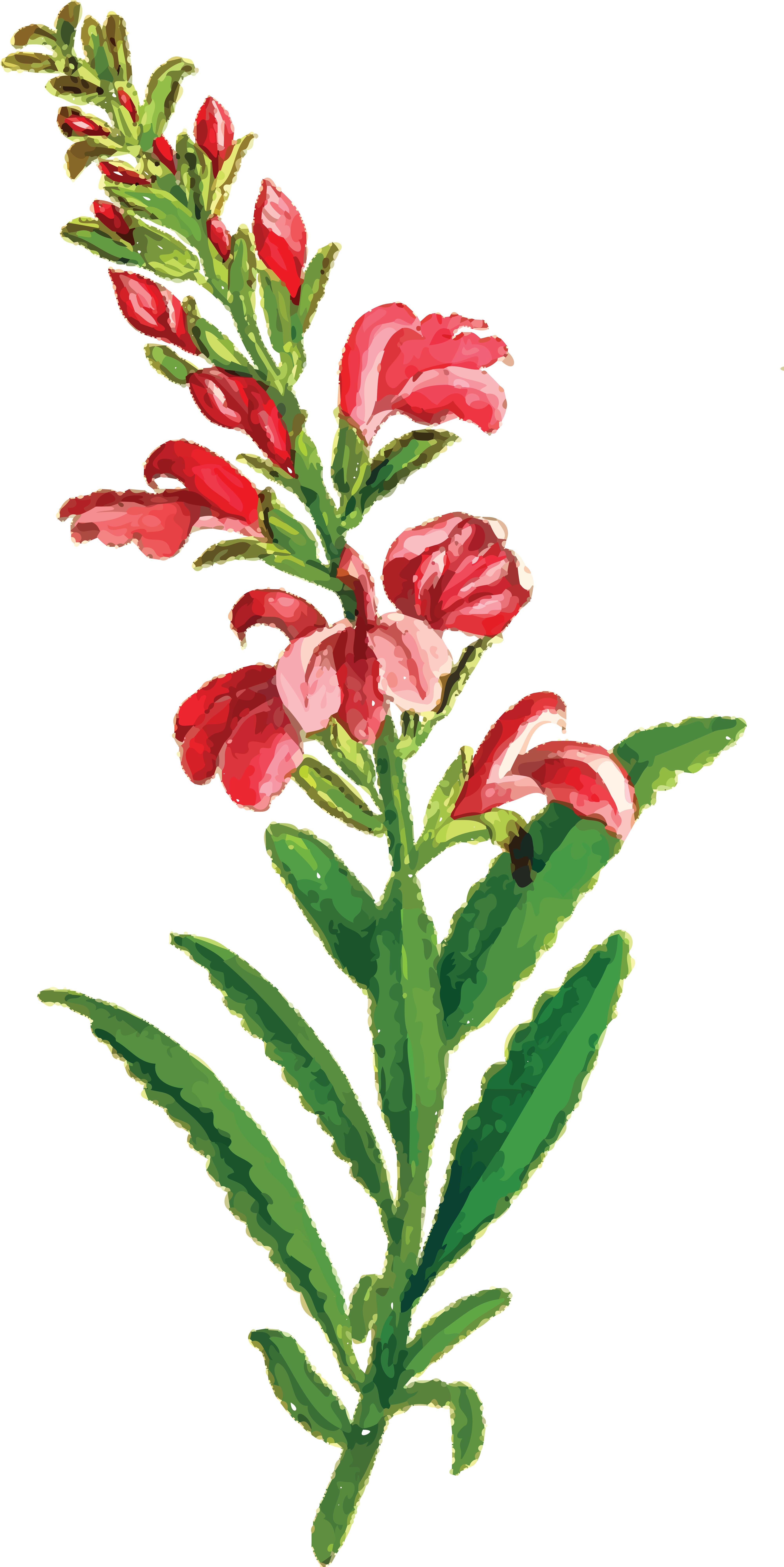Transparent Free Clipart Flowers Bouquet - Clip Art Flower Bouquet Png, Png  Download - kindpng