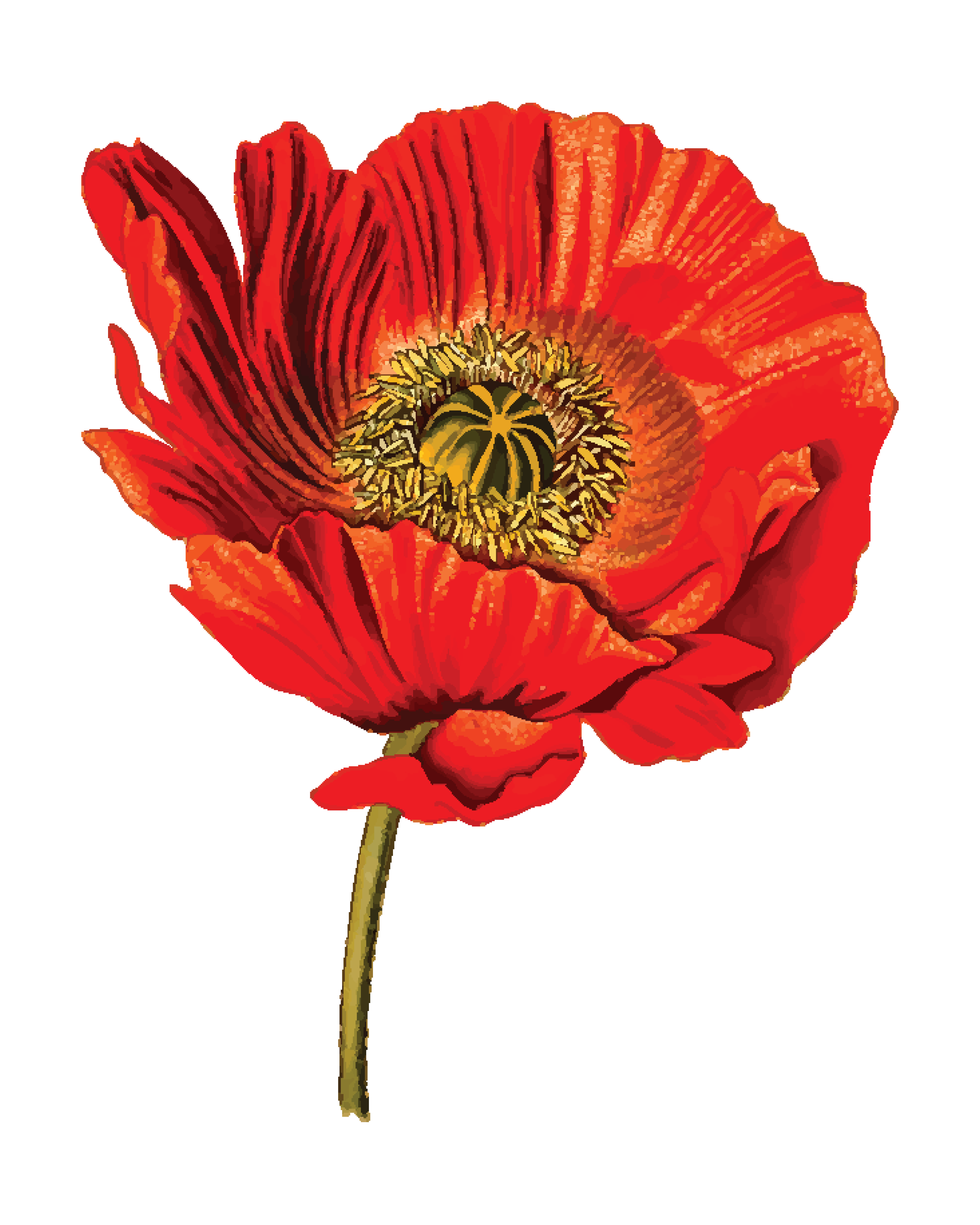 Free Clipart Of A Poppy Flower