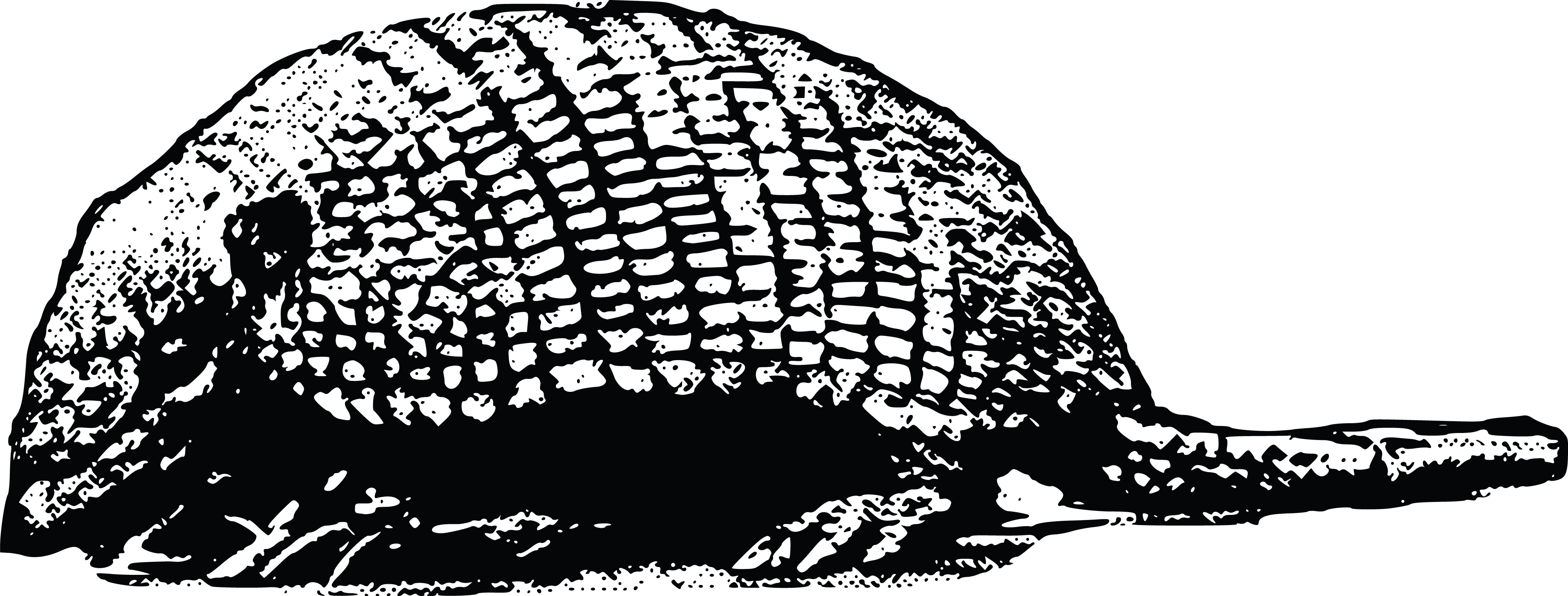 clipart of an armadillo