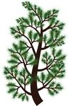 Free Clipart Of A Pine Tree Branch
