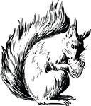 Free Clipart Of A Squirrel And Acorn