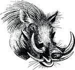 Free Clipart Of A Boar