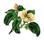 Free Clipart Of A Flowering Plant