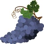 Free Clipart Of Grapes
