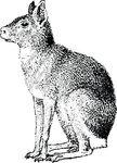 Free Clipart Of A Mara
