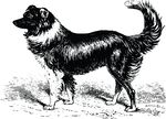 Free Clipart Of A Border Collie Dog