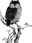 Free Clipart Of A Perched Owl
