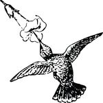 Free Clipart Of A Hummingbird