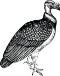 Free Clipart Of A Vulture