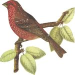 Free Clipart Of A Bird