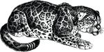 Free Clipart Of A Crouching Jaguar