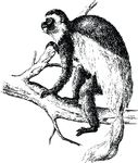 Free Clipart Of A Monkey