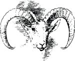 Free Clipart Of A Bighorn Sheep