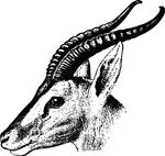 Free Clipart Of A Gazelle