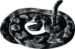 Free Clipart Of A Rattle Snake