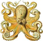 Free Clipart Of An Octopus