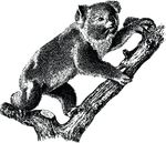 Free Clipart Of A Koala