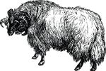 Free Clipart Of A Sheep