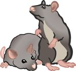 Free Clipart Of Rats Or Mice