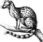 Free Clipart Of A Genet