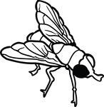 Free Clipart Of A Fly