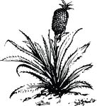 Free Clipart Of A Pineapple Plant