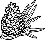 Free Clipart Of A Pinecone