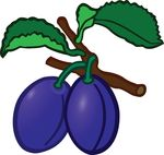 Free Clipart Of Plums