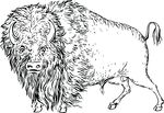 Free Clipart Of A Buffalo