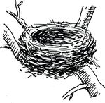 Free Clipart Of A Bird Nest