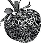 Free Clipart Of A Strawberry