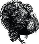 Free Clipart Of A Turkey