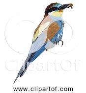 Free Clipart Of European Bee Eater Bird