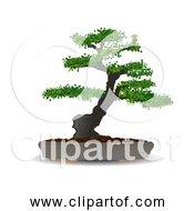 Free Clipart Of Bonsai Tree In Pot