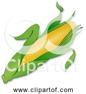 Free Clipart Of Corn Ear