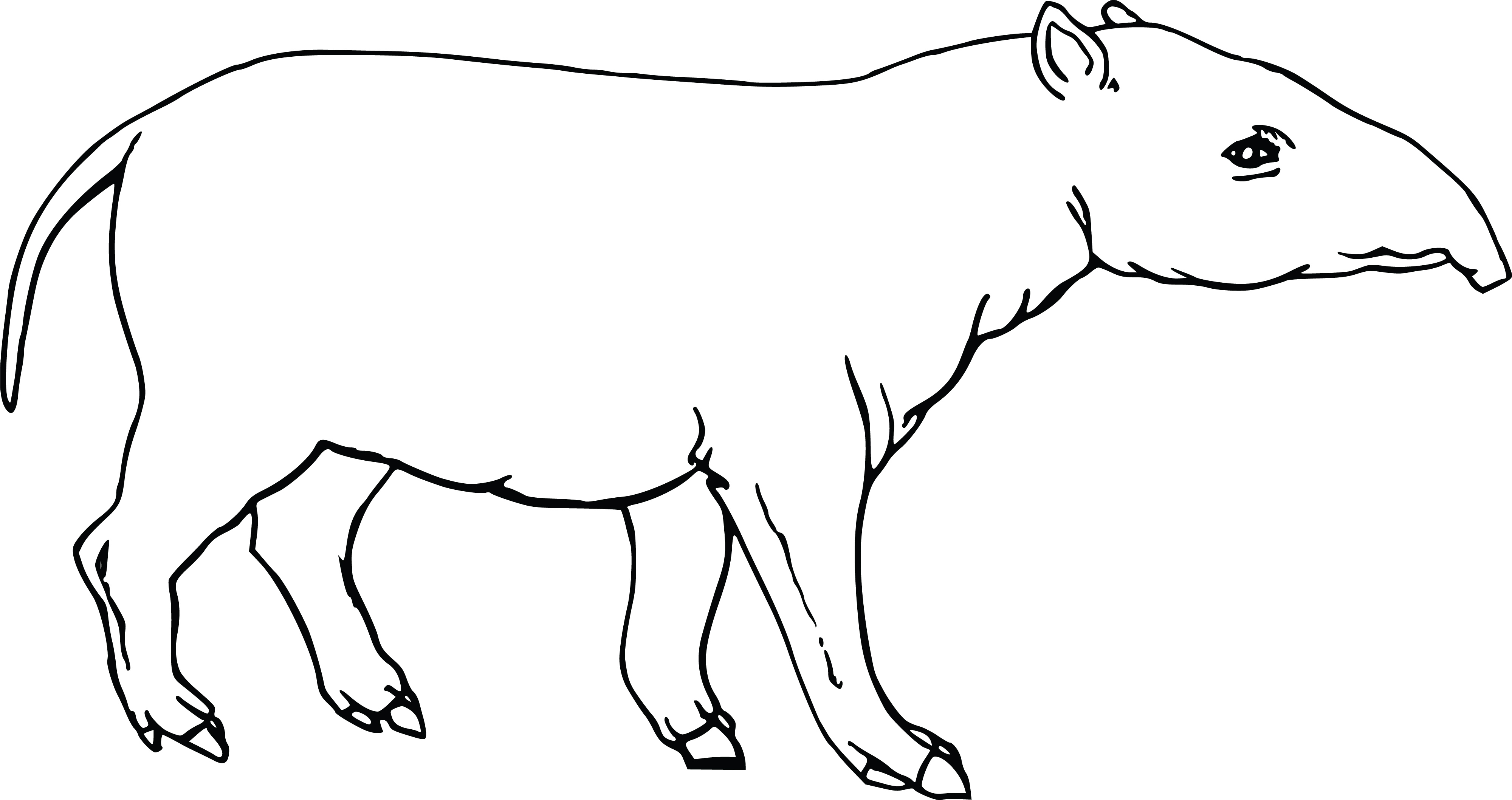 free clipart of a tapir