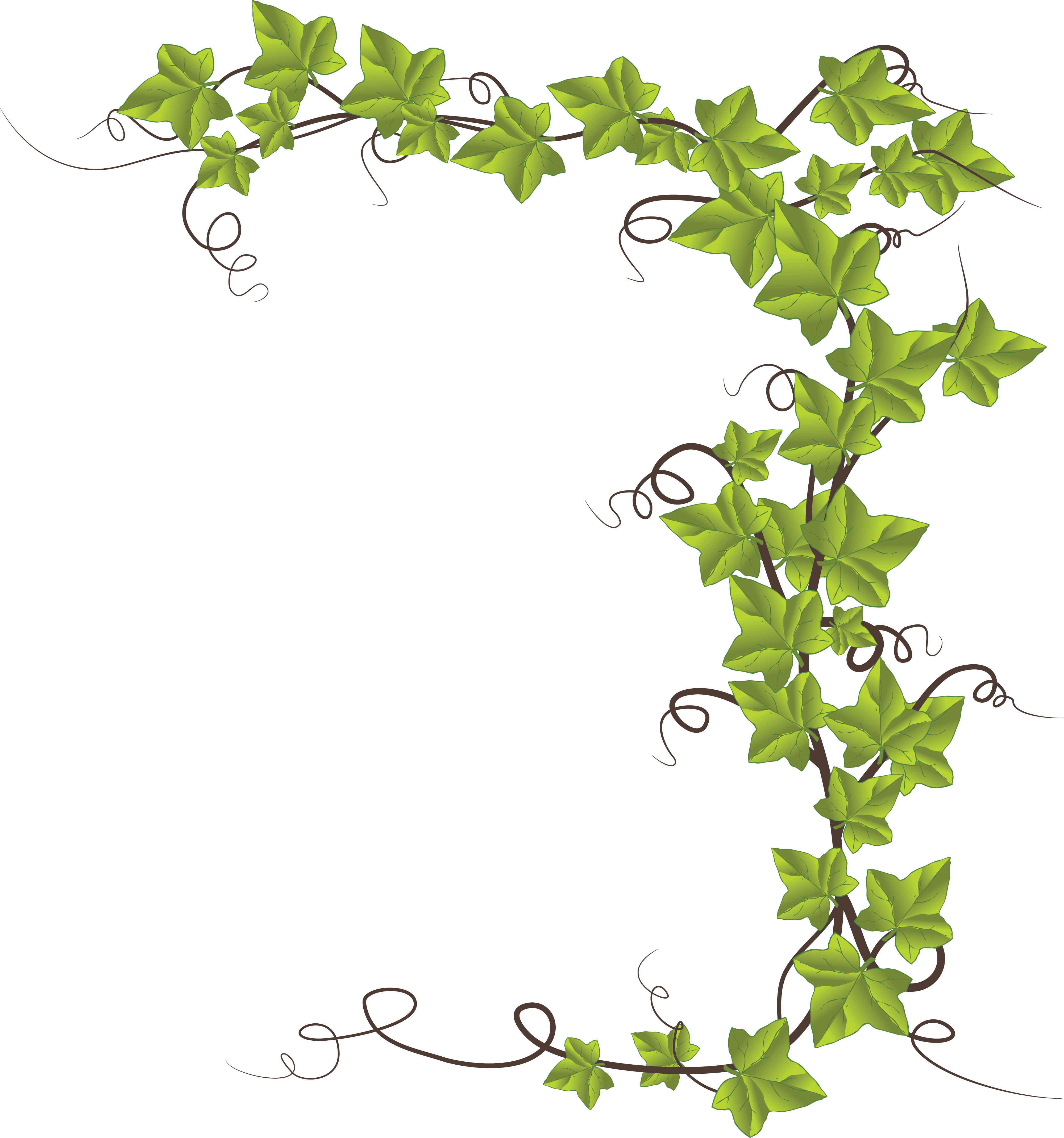 free clipart of an ivy border