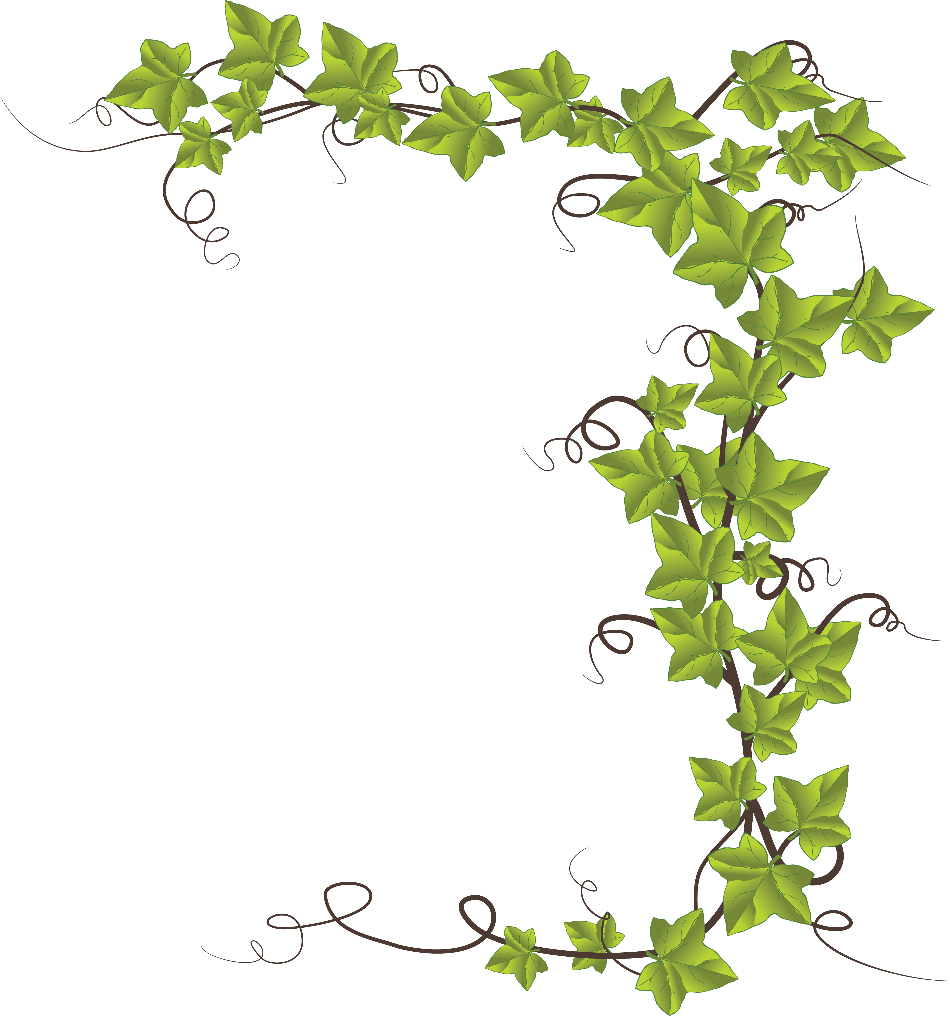 1610-Free-Clipart-Of-An-Ivy-Border Palm House Plant With No Background on house with clouds, house with transparent background, house with gift, white house background, house with square, house with white, house with bubbles, house with sand, house with garage on side, house with no nails, house with orange, house with no home, house with christmas, house with brown, house with green, house with water, house with black, house with hearts, house pattern background, house with food,