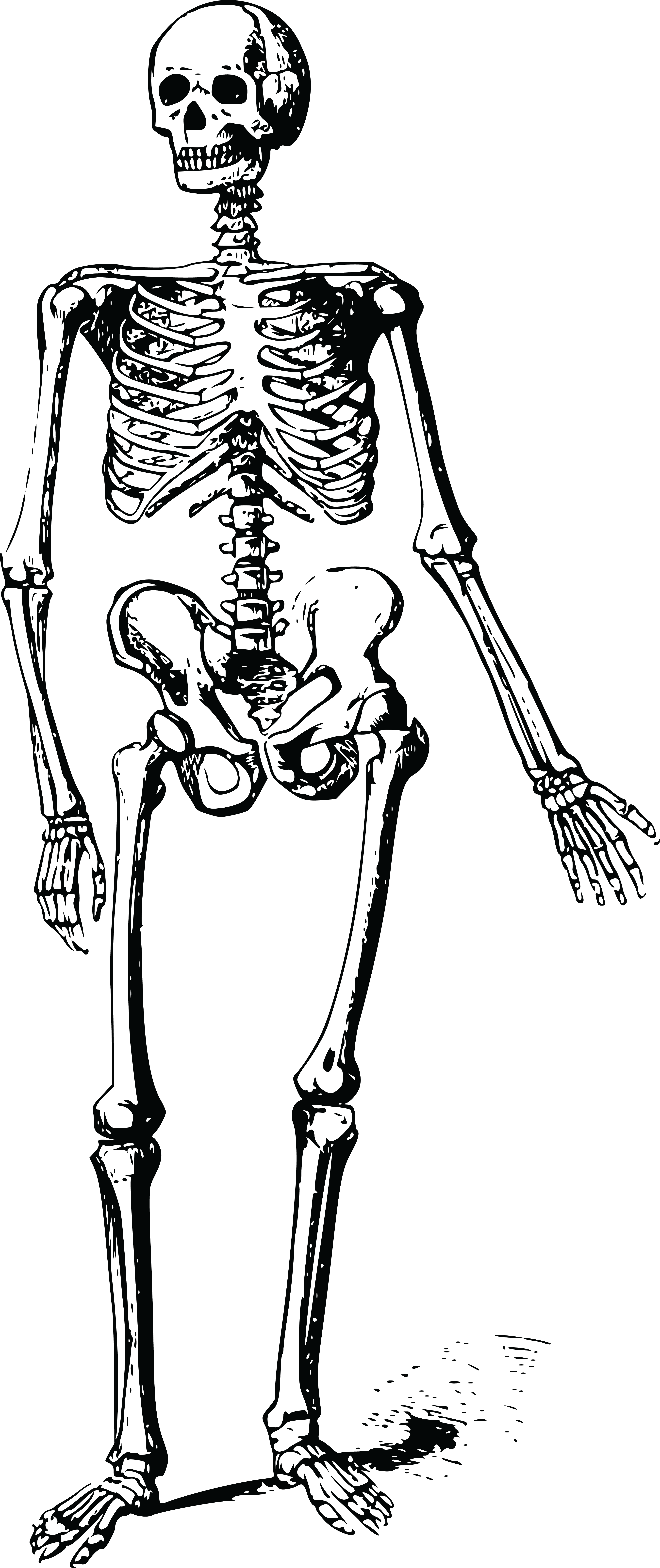 free clipart of a skeleton rh free clipartof com skeleton clip art free printable skeleton clip art for kids