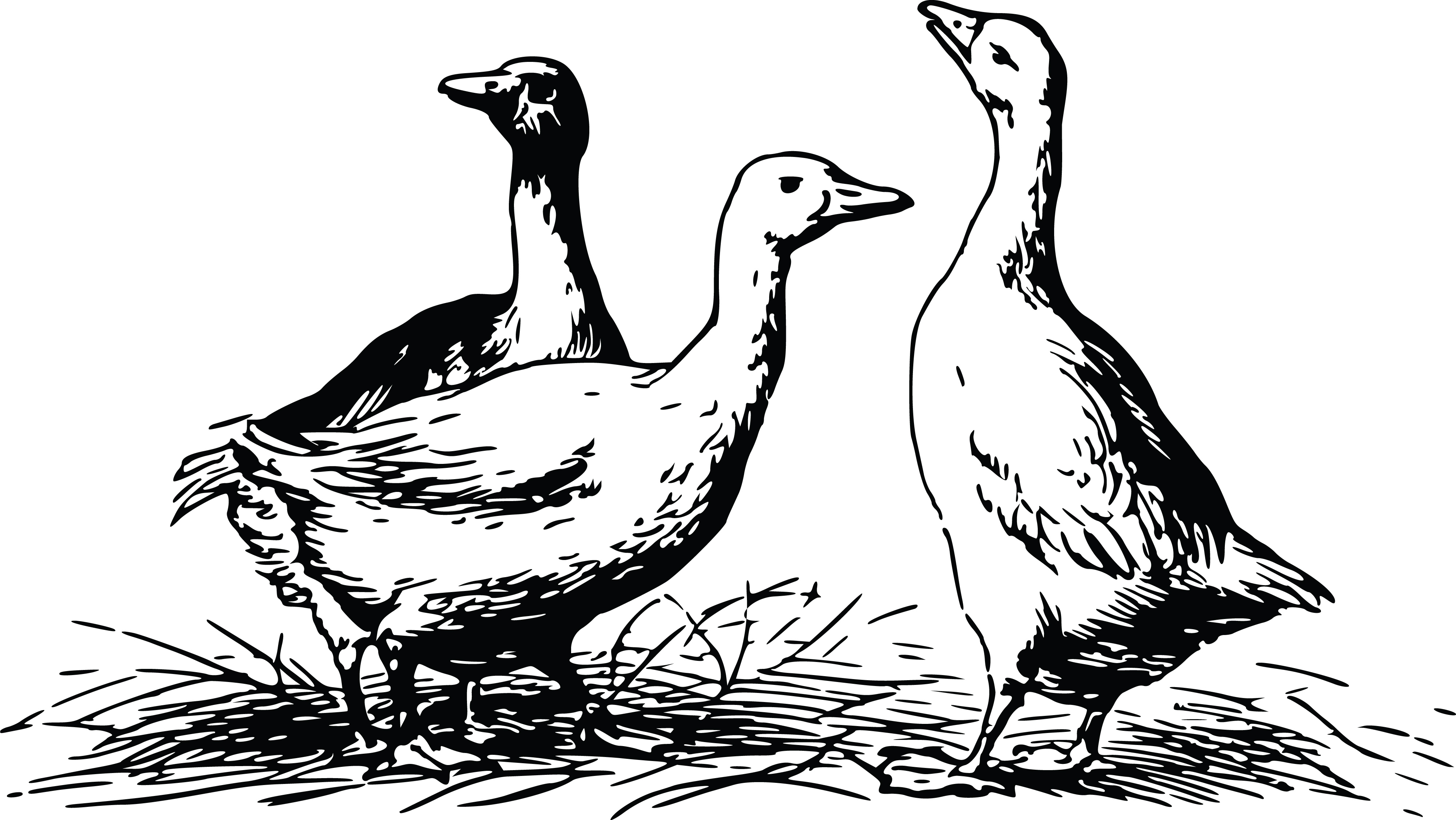 free clipart of geese rh free clipartof com geese clip art images goose clipart