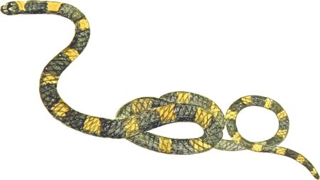 Free Clipart Of A snake