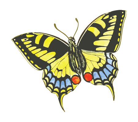 Free Clipart Of A butterfly