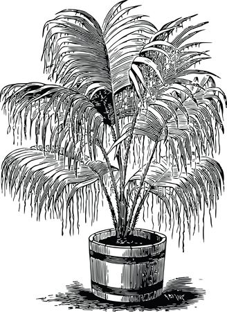 Free Clipart Of A palm plant