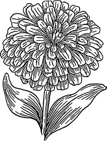 Free Clipart Of A flower