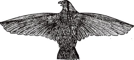 Free clipart of a falcon