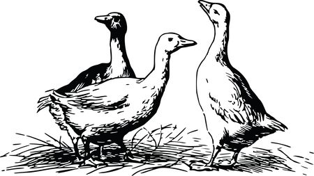Free Clipart Of geese