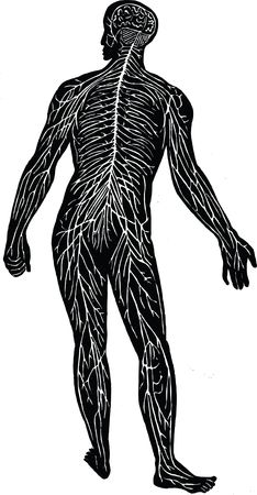 Free Clipart Of the nervous system